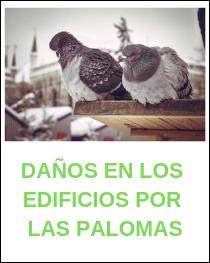 Daño en los edificios por las palomas
