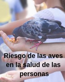 Riesgo salud palomas
