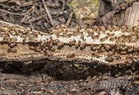 Servicios Eliminar termitas