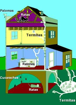 Plagas afectan una casa