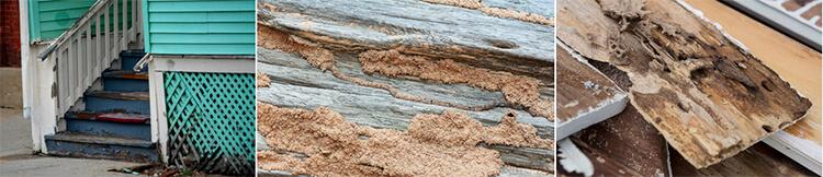 Como detectar termitas