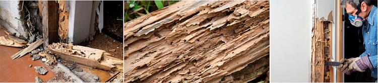 Que daños causan las termitas