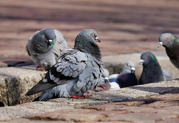Ahuyentar palomas calle