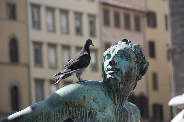 Ahuentar palomas problemas