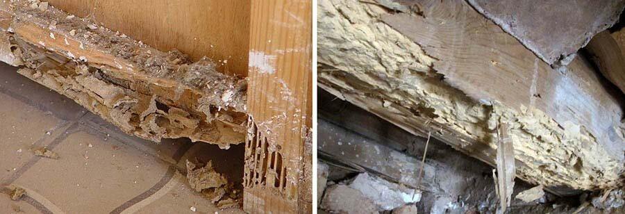 Tratamientos profesionales para eliminar las termitas