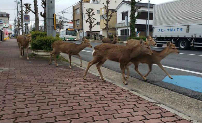 Ciervos en la ciudad