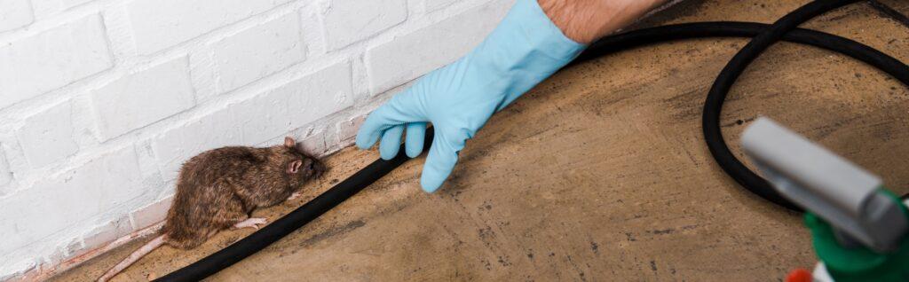 Como eliminar los ratones de tu casa